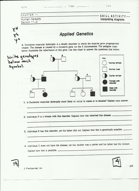 Punnett Square Worksheet Human Characteristics Answers – Punnett Square Worksheet 1 Answers